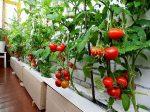 Что посадить на балконе – Огород на балконе: выращивание овощей своими руками для начинающих, как посадить и вырастить, дачу сделать